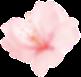 flower_2 (Demo)
